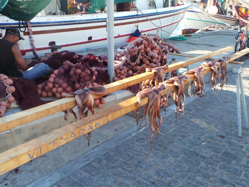 Eating octopus in Greece