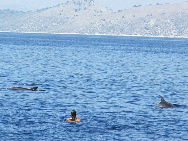 Dolphins in Greece